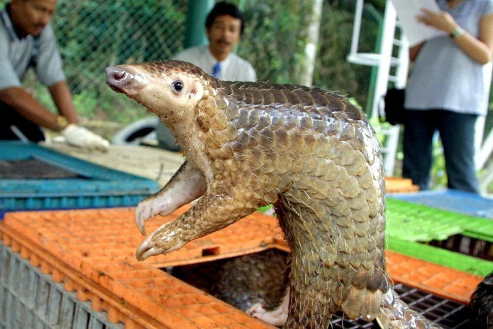 Animales peligrosos en Vietnam